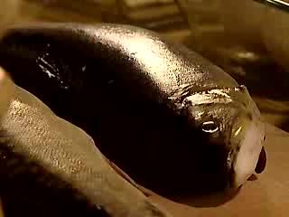 Anielska Kuchnia Kotleciki Ikardia Video W Viderinfo