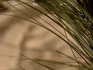 Anielska Kuchnia Pierogi Ikardia Video W Viderinfo